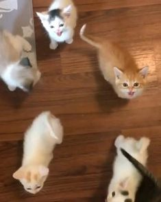 Funny Cute Cats, Cute Funny Animals, Cute Baby Animals, Animals And Pets, Cute Dogs, Cute Little Kittens, Cute Baby Bunnies, Baby Cats, Kittens Cutest