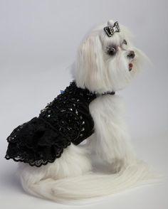 black tie lace gown