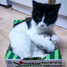 Guter Vorsatz: Mehr Sport! #katze #cats #cat