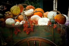 "wistfullycountry: "" Pick Your Pumpkin - We Heart It """