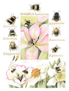 Knee Deep in Bumblebees - Marjolein Bastin