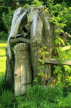 For our Fairy garden. Tree stump with hobbit door Gnome Garden, Garden Art, Flora Und Fauna, Tree Carving, Gnome House, Fairy Doors, Garden Ornaments, Fairy Houses, Garden Inspiration
