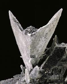 We looked at Cerussite recently and this is another, differently shaped, example of it. This spectacular 'arrowhead' twin cerussite crystal is 7cm high. Cerussite is a species of lead carbonate ore and is one of the most common secondary minerals from Broken Hill. The sparkles are minute anglesite crystals, which is a form of lead sulphate. Specimen from Block 11, Proprietary Mine, Broken Hill. Economic Mineral Collection specimen No.7585. http://www.trade.nsw.gov.au/legal/copyright