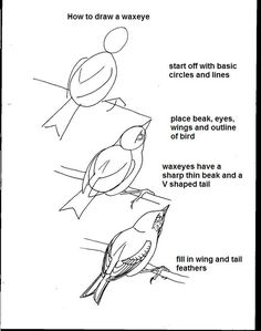 how to draw a bird. Please also visit www. JustForYouPropheticArt.com for inspirational art and stories. Thank you so much!