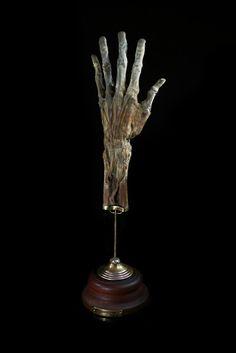 Mummified Human Hand. Ryan Matthew's Private Collection