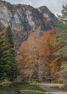 Selva de Oza, circular por Senda de los Ganchos y Vía Romana - Rutas por el Pirineo