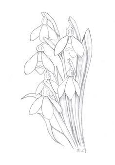 66 Besten Blumen Zeichnen Bilder Auf Pinterest Drawing Flowers