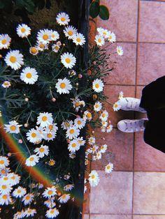Vintage Flowers Wallpaper, Beautiful Flowers Wallpapers, Beautiful Nature Wallpaper, Pretty Wallpapers, Flower Wallpaper, Tumblr Photography, Girl Photography Poses, Nature Photography, Creative Instagram Photo Ideas
