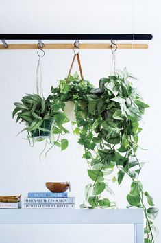hanging plants for the bathroom