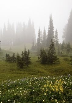 Foggy hills of Mount Ranier, Washington photographed by Paula Thomas Nature Aesthetic, Far Away, Belle Photo, Pretty Pictures, Aesthetic Pictures, Beautiful Landscapes, The Great Outdoors, Countryside, Places To Go
