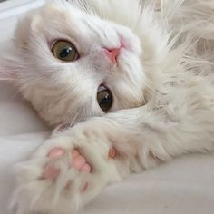 I saved more fluffy beautiful and cute cats Cristina Rizea Cute Cats And Kittens, Baby Cats, I Love Cats, Kittens Cutest, Baby Animals, Cute Animals, Fluffy Kittens, Animals Images, Pretty Cats