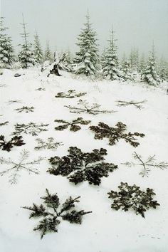 pine snowflakes