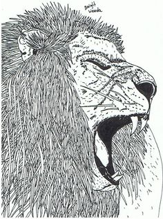 1000 Images About LeeuwenTijgers On Pinterest Lion Pencil Drawings And Coloring For Adults