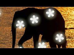 Wild Life, Youtube, Animals, Animales, Animaux, Wildlife Nature, Animal, Animais, Youtubers