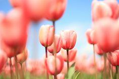 Springedy spring spring
