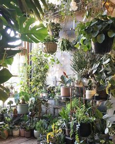 """Tristina Smith on Instagram: """"Open as usual this weekend 🌿💚 Closed on Mondays as usual 🚿😎 @conservatory_archives . . Follow @tristinasmith1288 if you love gardening. . .…"""" Room With Plants, House Plants Decor, Plant Decor, Garden Plants, Indoor Plants, Plant Rooms, Plant Aesthetic, Decoration Plante, Interior Plants"""