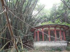 Poço perdido. Jardim Botânico, João Pessoa, Paraíba. Fotografado por Marina Fonseca.