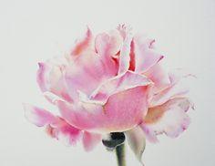 Розы... Художник - акварелист La Fe.
