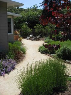 decomposed granite landscape ideas - Google Search