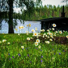 Finland, Golf Courses, My Love, Places, Lugares