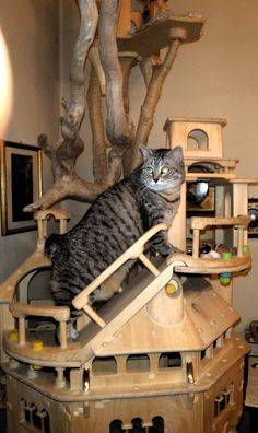 DomusfeliS - special playzones for cats - Unique pieces for unique cats, sculptures for cats, untreated precius wood:plum, apricot, seasoned poplar, birch, bamboo, oak and piracanta. #catcastle #cattower #catcondo #cattree #cattoy #playzones for cats #petdesign #amazingcatscratching #cat scratch forniture #catgift #catfrendlyhome #felinelovers Plum Apricot, Cat Castle, Cat Condo, Unique Cats, Cat Scratching, Cat Tree, Cat Gifts, Animal Design, Birch
