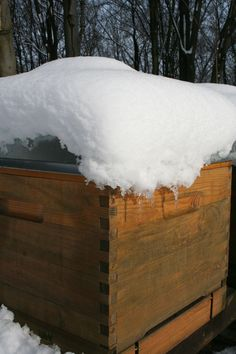 Winterizing your bees the natural way