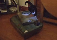 Discover & share this Tanque De Guerra GIF with everyone you know. GIPHY is how you search, share, discover, and create GIFs. Funny Cats, Funny Animals, Cute Animals, Quites, Cat Gif, Diamond Are A Girls Best Friend, The Funny, Cats And Kittens, Cat Lovers
