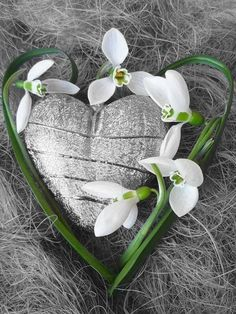 Heart In Nature, Heart Art, I Love Heart, Belle Photo, Shades Of Green, Spring Flowers, Color Splash, Heart Shapes, Beautiful Flowers