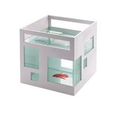 fish architect