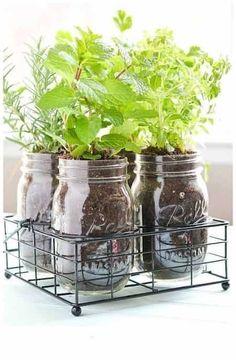 pot en verre pour un jardin aromatique maison