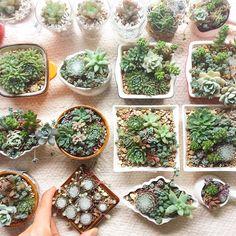 多肉植物のミニ寄せ植え(Plan2)Kitowa