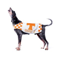 Smokey. University of Tennessee, 9th generation. Bluetick coonhounds are bred to hunt. Raccoons, specifically. And when they find one? They alert their owners by howling to the treetops. Smokey IX doesn't hunt raccoons these days. But that doesn't keep him from howling after every Tennessee touchdown -- just like the eight Smokeys before him. A combination of the applause and a signal from one of his handlers triggers the 8-year-old hound's innate urge to howl.  No raccoons necessary.