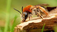 Bee Macro Tree