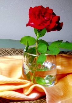 rose in glass - WetCanvas | Reference Image Library