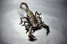 Scorpion By Origami M H G