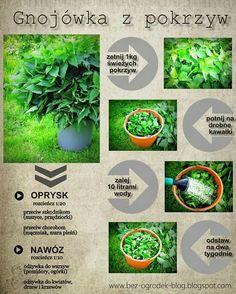😄 Vegetable Garden, Garden Plants, House Plants, Summer House Garden, Home And Garden, My Secret Garden, Garden Gates, Handmade Home, Garden Inspiration