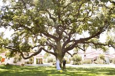 Ojai Valley Inn & Spa Wedding.  Oak Tree.