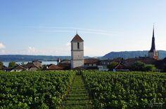 Weinfeste am Bielersee
