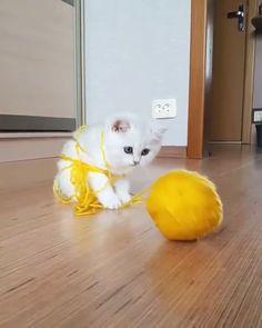 What a naughty kitty! 😂😍 What a naughty kitty! 😂😍 What a naughty kitty! 😂😍 cute What a naughty kitty! Funny Cute Cats, Cute Baby Cats, Cute Cats And Kittens, Cute Funny Animals, Kittens Cutest, Cute Dogs, Kittens Playing, Fluffy Kittens, Super Cute Animals