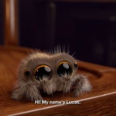 Lucas is the cutest spider that will cure your arachnophobia.