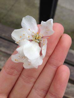 blossoms 01/04/2014