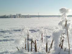 Winter. Copyright PeeKoo. http://naistenpaivankunniaksi.blogspot.com