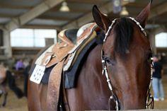 quarter horse show #horses