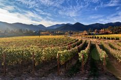 Ledger David Vineyard in southern Oregon.  Photo by Marc Salvatore