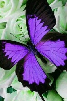 Separate the precious from the worthless Most Beautiful Butterfly, Beautiful Bugs, Amazing Nature, Butterfly Kisses, Purple Butterfly, Butterfly Wings, Vintage Butterfly, Beautiful Creatures, Animals Beautiful