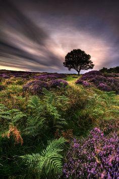 "Into The Light"" North Yorkshire Moors   Ian Snowdon"