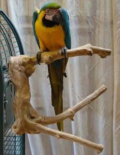 Perches 46291: Parrot Perch Pet Bird Perch Natural Wood Multi Branch For Larger To Extra Large -> BUY IT NOW ONLY: $74.99 on eBay!