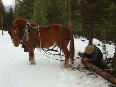suffolk punch draft horses | Logging with a Suffolk Punch