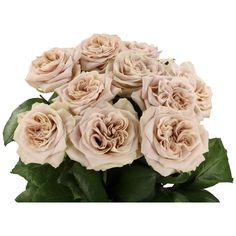 Blush Flowers, Sugar Flowers, Fall Flowers, Cut Flowers, Pretty Flowers, Colorful Flowers, August Wedding Flowers, Rose Wedding, Hamptons Wedding