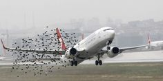 There's An Easy Way To Stop Birds Hitting Airplanes That No One Is Talking About